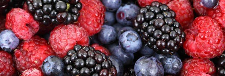 Come Frutos del Bosque, productor de mermeladas ecológicas de frutos del bosque
